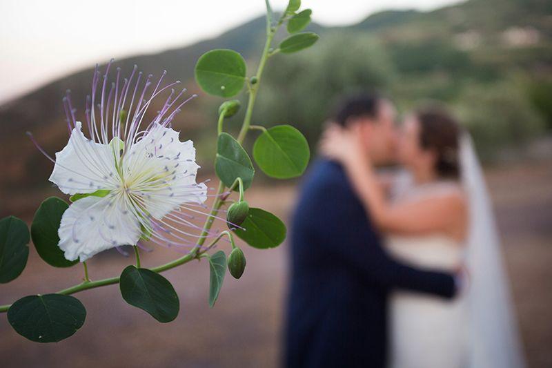 sposi si baciano con fiore del cappero